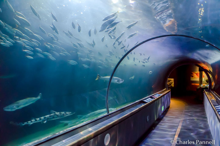 Viewing tunnel at Aquarium of the Bay