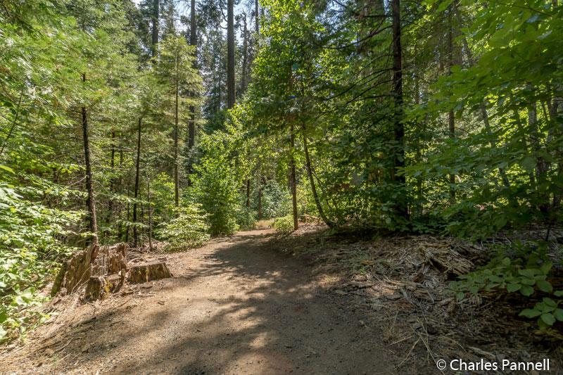 Stanislaus River Trail at Calaveras Big Trees State Park