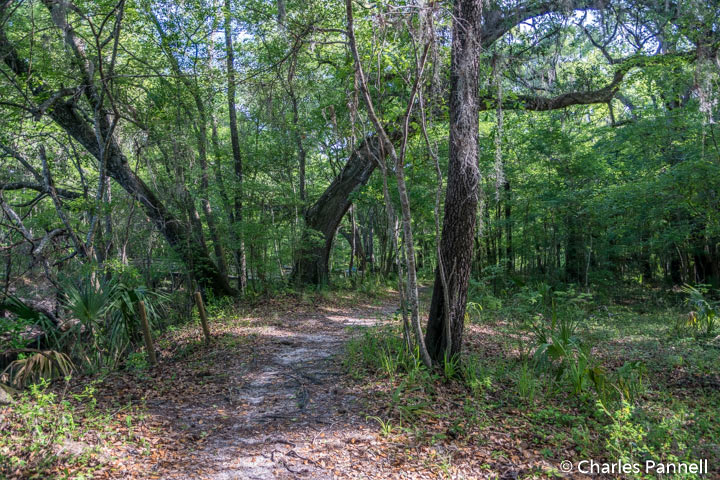 Suwannee River Trail at Suwannee River State Park