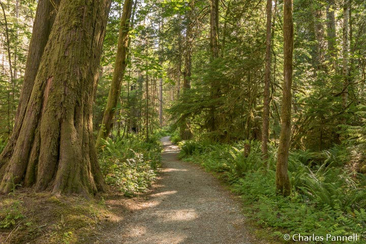 Trail of the Cedars in Northern Cascades National Park