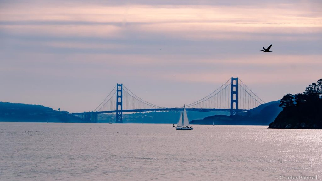 Tiburon — A Hidden Gem Across San Francisco Bay