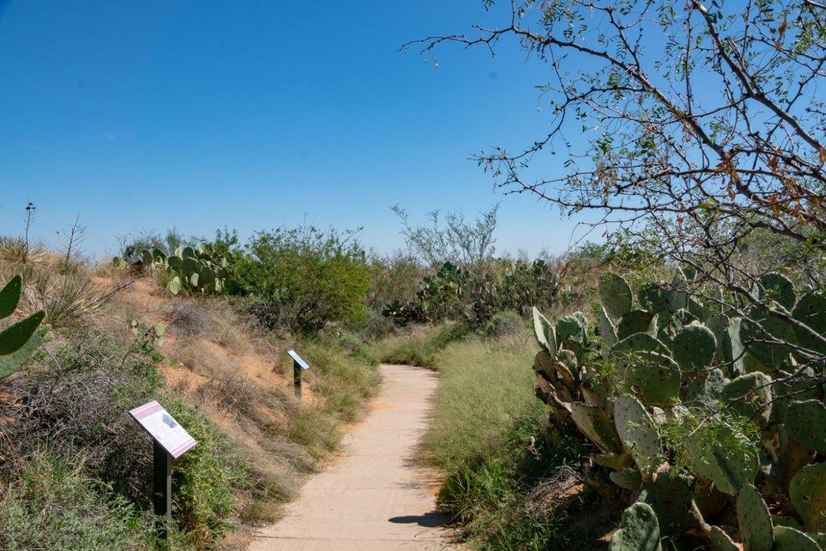 Sidewalk through the Sandhills habitat