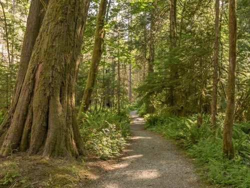 Photo of Trail of the Cedars in North Cascades National Park