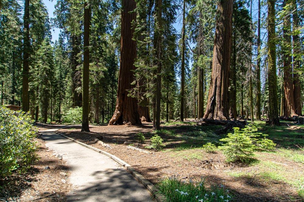 Enjoy the Giant Sequoias in Wheelchair-Accessible McKinley Grove