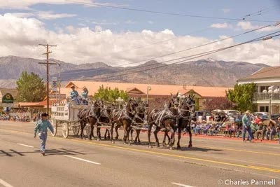 Mule Days An Eastern Sierra Tradition