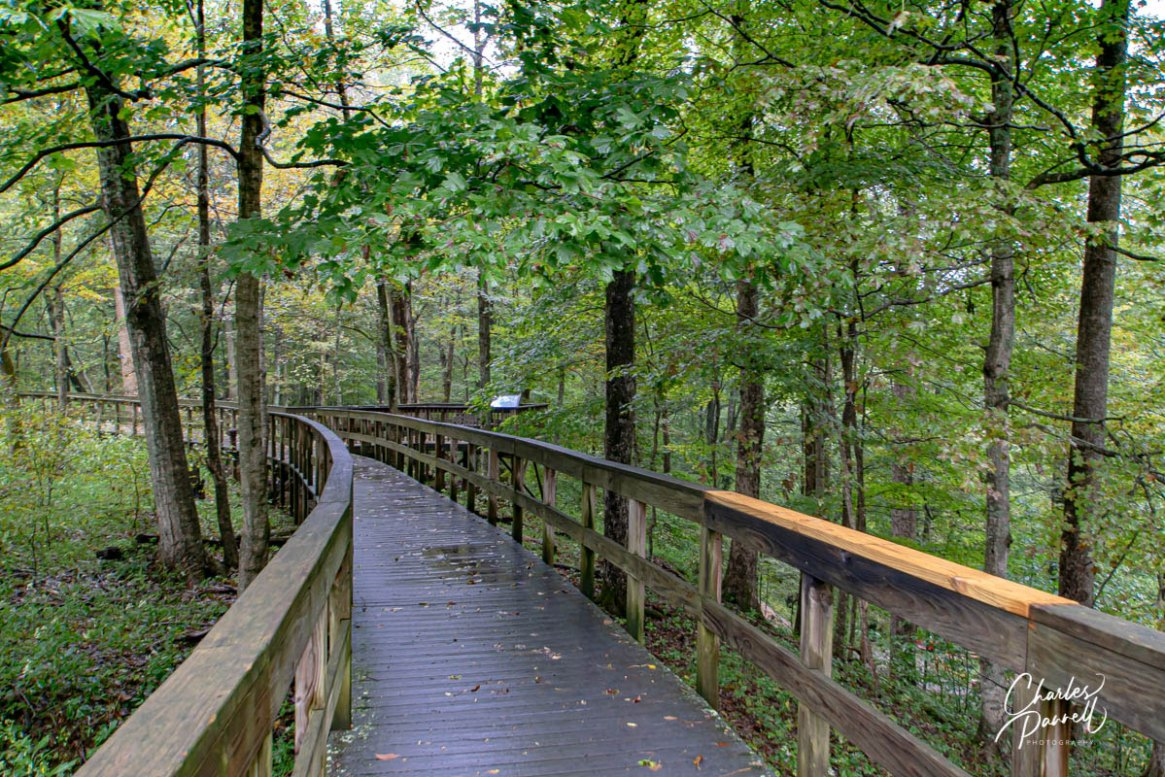 wheelchair-accessible road trip - photo showing a boardwalk trail through a hardwood forest