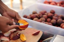 Slicing a nectarine for sampling at the Pacific Produce booth.