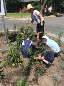 Trinity Catholic School Traffic-Circle Planting, June 10