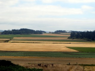 Ebey Reserve