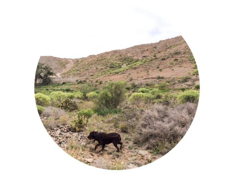 Emigreren Gran Canaria - Over mij - Bram