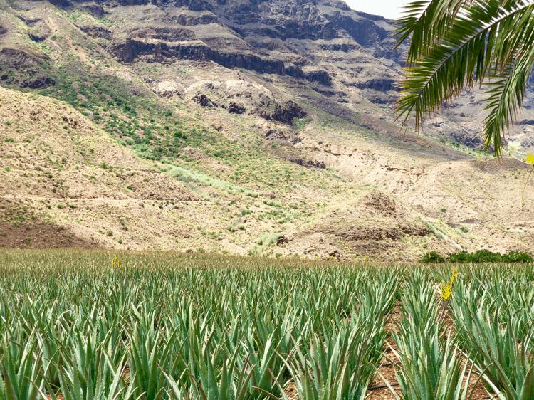 Emigreren Gran Canaria - Webshop Aloeveracremes