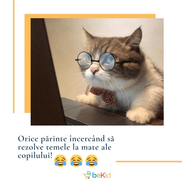 mema pisica bekid