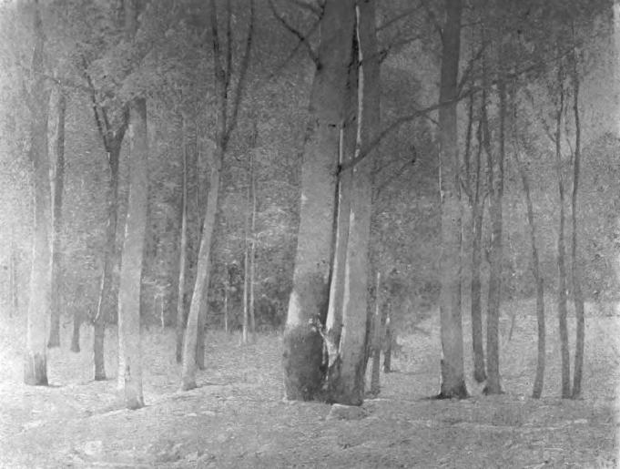 Emil Carlsen The Beechwoods, c.1909
