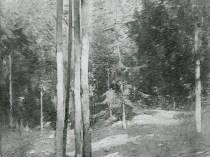 Emil Carlsen : Forest landscape, ca.1926.