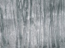 Emil Carlsen Wood Interior, c.1908