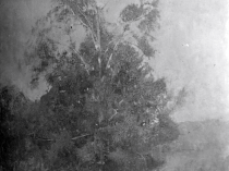 Emil Carlsen : Connecticut tree, ca.1915.