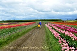 tulip fields 9