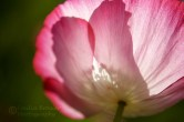 pink and white luminous