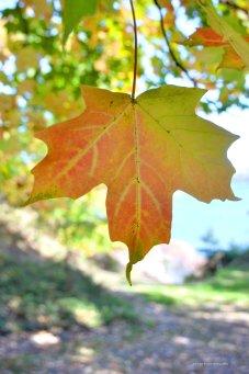 leafny1