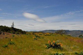 serenity photograph Tom McCall Preserve 1
