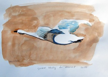 Swan 13, watercolor on paper, 8 by 10 in. Emilia Kallock 2016