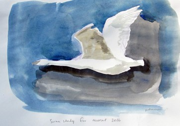 Swan 9, watercolor on paper, 8 by 10 in. Emilia Kallock 2016