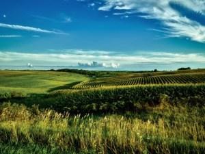 paesaggio-agricolo