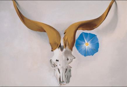 Rams Head, Blue Morning Glory