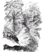 waiotemarama, waterfalls, north island, Emilie Geant, illustration, sketch, new zealand