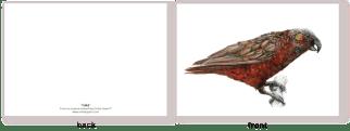native, bird , new zealand , illustratoin , watercolor , ink
