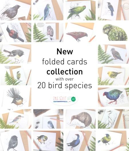 birds, New Zealand, bird, kiwi, kiwiana, feather, wings, wild life, kiwiana, folded cards