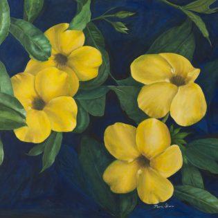 Yellow Flowers (Hibiscus)