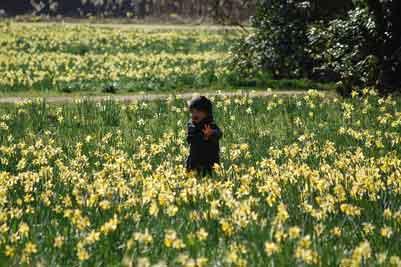 Frühling-258