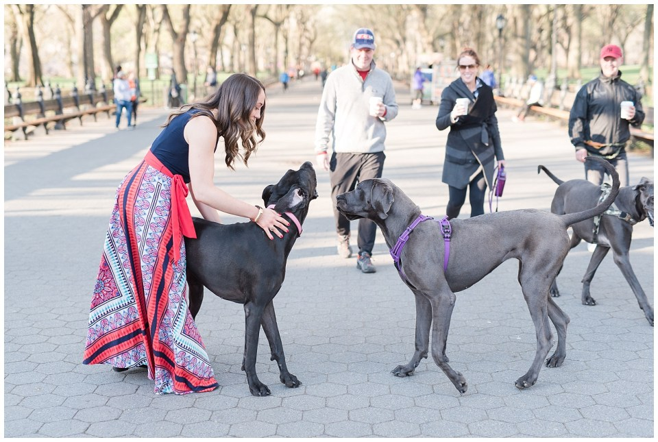 central-park-mall-puppies