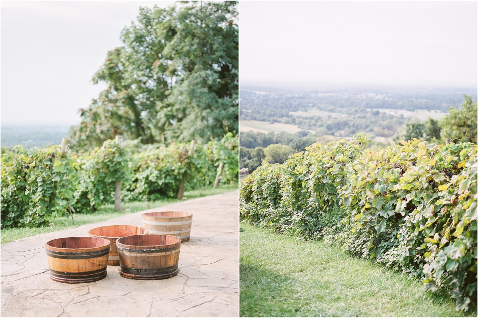 bluemont vineyard photos