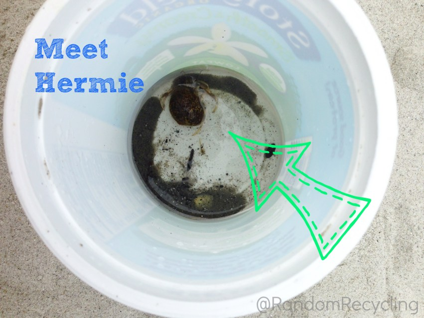 Hermit Crab Beach Discovery