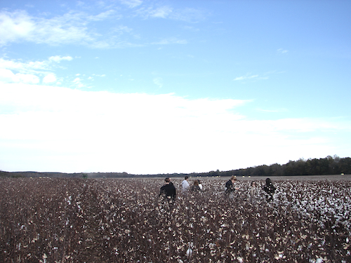 Our tour in the field being harvested