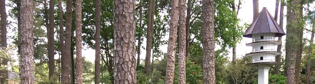 horizontal banner with pine tree trunks and a large birdhouse