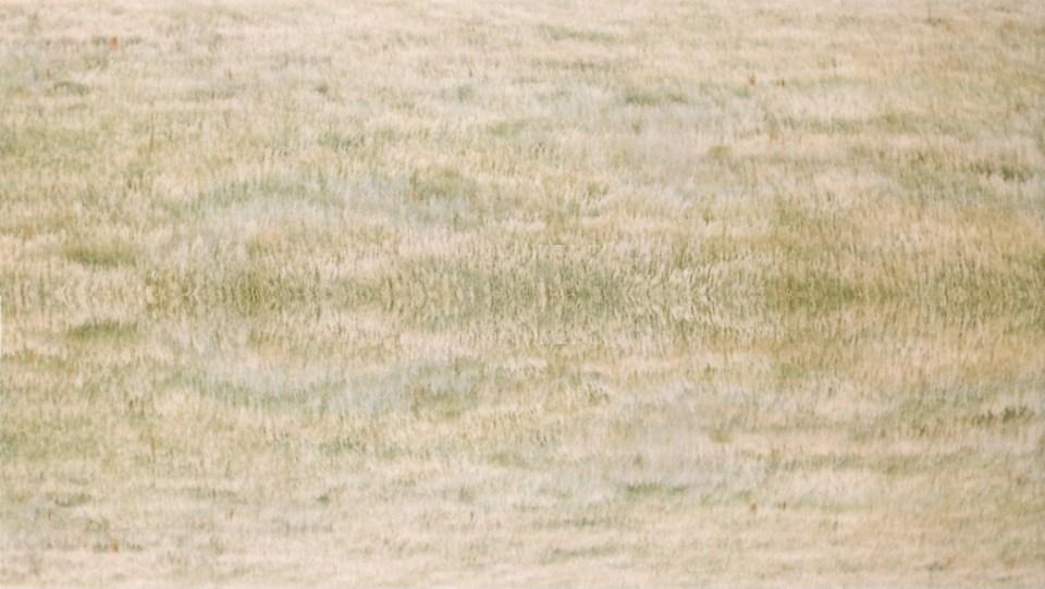 grasslands for website background