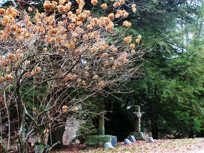 Sewanee Graveyard