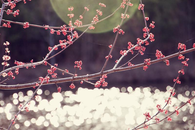 Spring buds flare