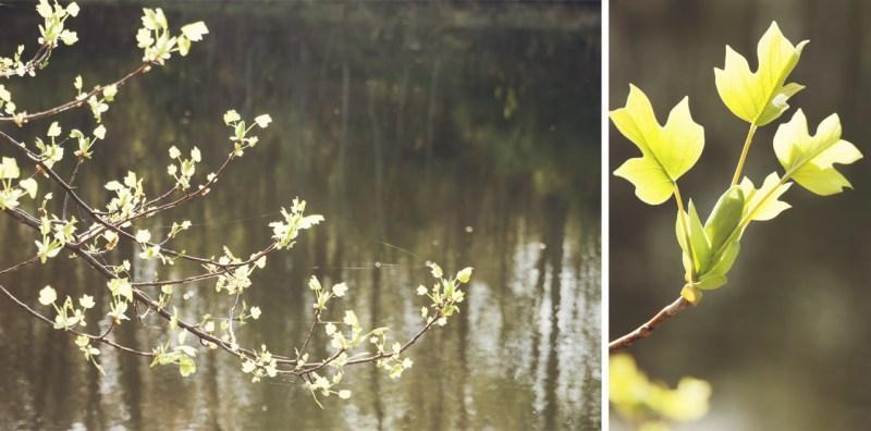 New Leaves