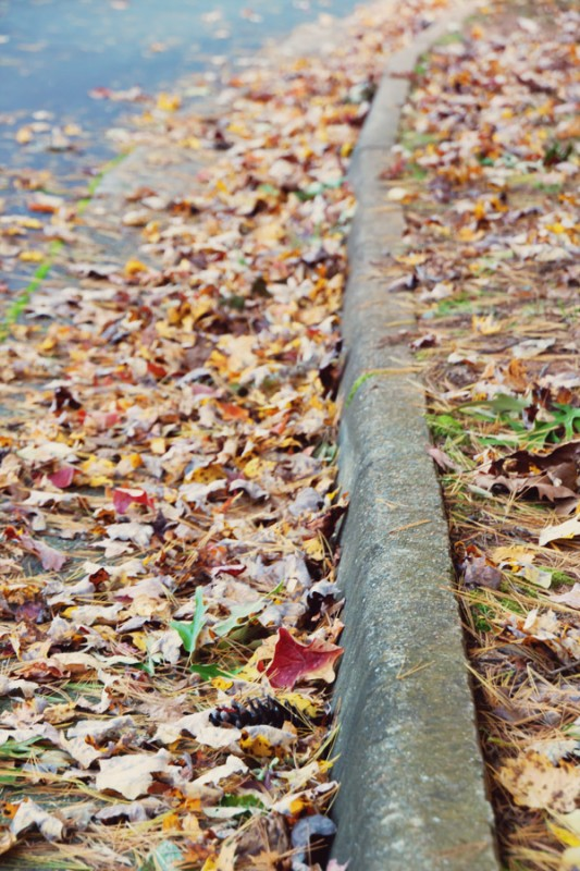 Leaves against a curb