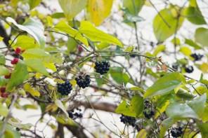 1007_berries
