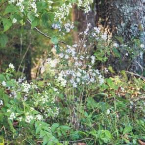 1007_wildflowers