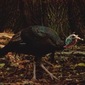 1007_turkey1