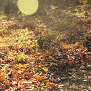 1021_fall-leaves-ground