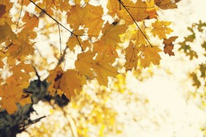 1021_fall-leaves7