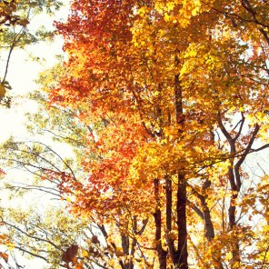1021_fall-trees3