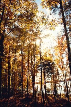 1021_fall-trees5